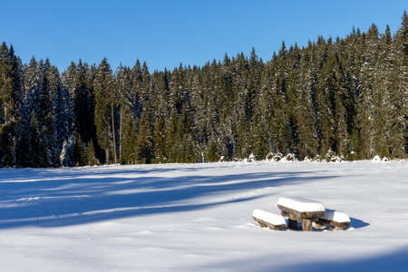 Wooden bench and table at winter forest of spruces tree in sunlight. Calm wintry morning scene with fresh snow at Pokljuka, Slovenia