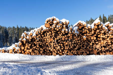 Forest pine trees log trunks felled by the logging timber industry covered with snow in winter Reklamní fotografie