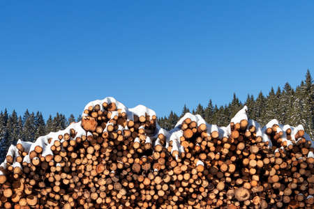 Forest pine trees log trunks felled by the logging timber industry covered with snow in winter Foto de archivo