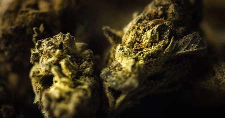 Medical Marijuana Buds on black background. Dried Cannabis Plant closeup