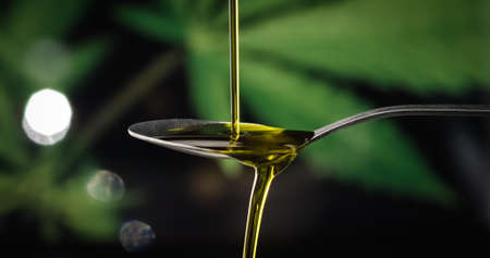 CBD Hemp oil, Hand pouring Cannabis oil on spoon against Marijuana plant. Alternative Medicine