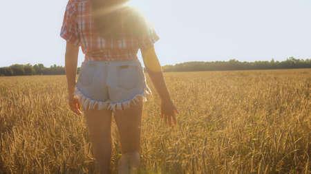 Womans hand slide through wheat in sunset light on a golden field.