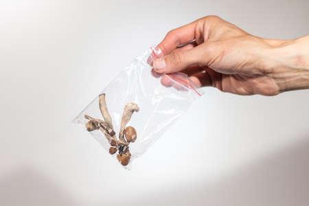 Psilocybin psychedelic microdosing. Magic Mushrooms in a plastic bag.