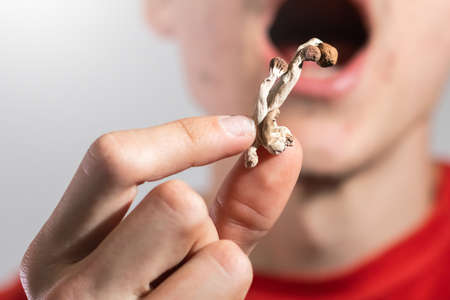Psilocybin psychedelic microdosing. Magic Mushrooms being eaten by a casual man.