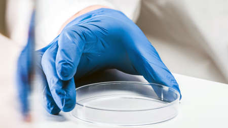 Chemical research in Petri dish on white background. Preparing plates in a microbiology laboratory.