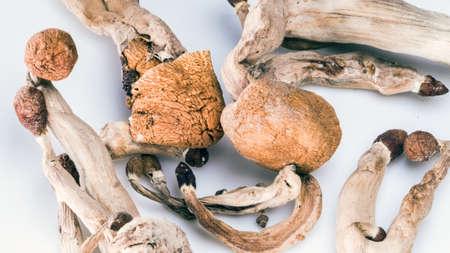 Magic Mushrooms on white background. Psilocybin compound laboratory research. 版權商用圖片