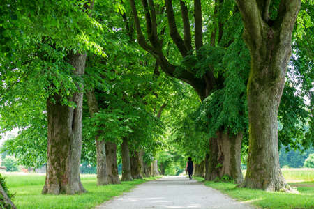 Woman having a walk in a Peaceful tree line country road with in spring with green leaves. 版權商用圖片