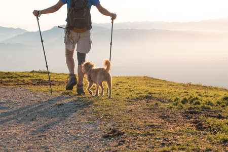 Hiker with dog and backpack with walking sticks on a mountain at sunset. 版權商用圖片