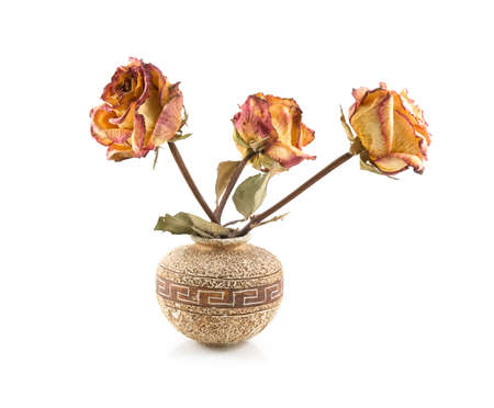 three dry roses in ceramic vase on a white background photo