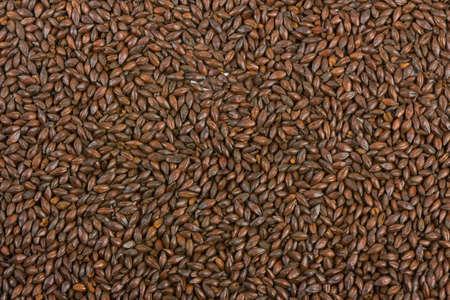 malt: Chocolate malt barley, an ingredient for beer.