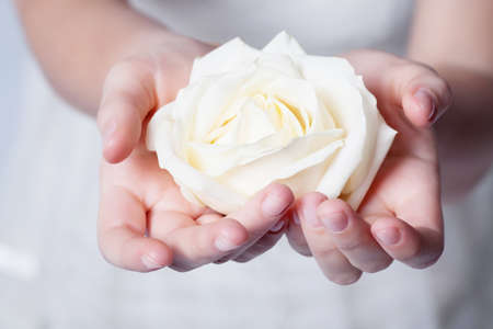 Rose in hands photo