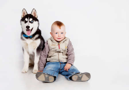 blue eye husky: Child with puppy husky in studio