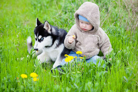 siberian: Child with puppy husky sitting on the grass