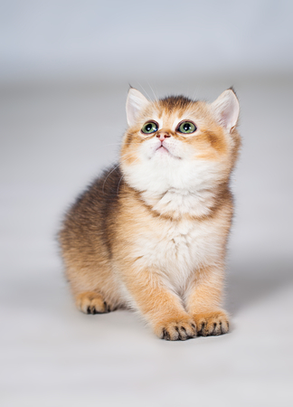 Little kitten photo in studio on white background