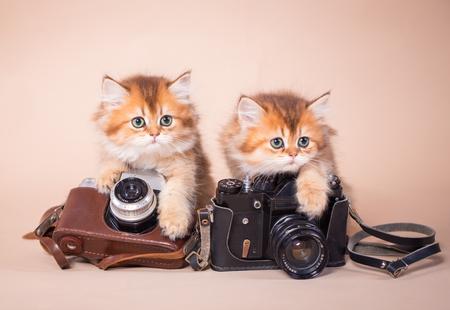 British shorthair cat with retro camera studio photo