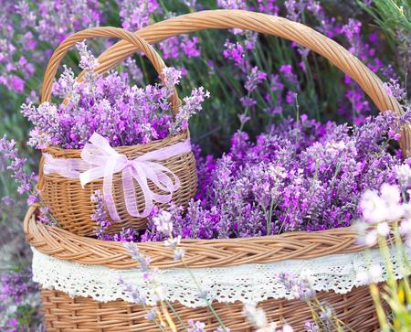 Lavendel bloemen in mandenmakerij