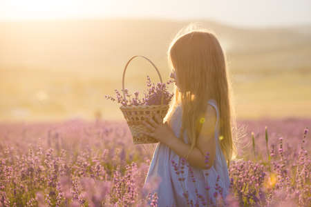 A little girl with a basket in a lavender field