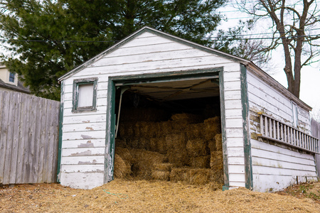 Dilapidated midwestern hay shed with ladder hanging on side. Hay coming out of building paint coming off