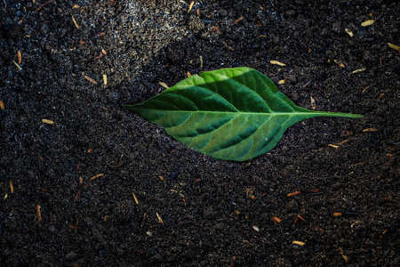 a solo green leaf in a garden soil with pieces of rice halls