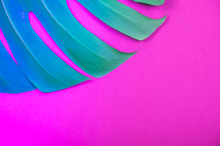 Creative  blue-green neon gradient tropical plant green monstera leaf on acid plastic pink background. Trendy summer and tropical concept. Place for text. Archivio Fotografico