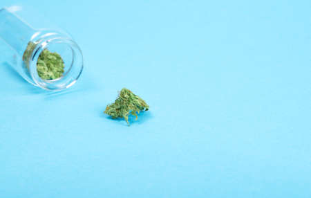 Dry trimmed medical marijuana buds in a small open glass jar and scattered aside on blue  background. Alternative treatment. Medical cannabis. Place for text.