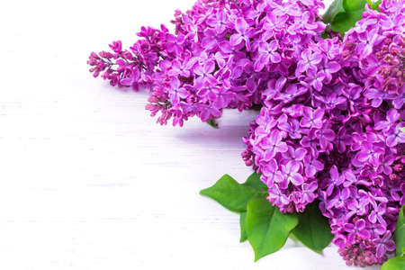 Beautiful bouquet of lilac flowers isolated on white background with copy space. Syringa vulgaris. Spring concept. Greeting card.