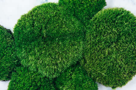 Top view of natural dark green moss background. Zero waste and eco-conscious concept.