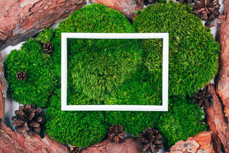 Top view of white frame with copy space on natural dark green moss background decorated with pinecone and bark. Zero waste and eco-conscious forest concept. Place for text. Stock fotó