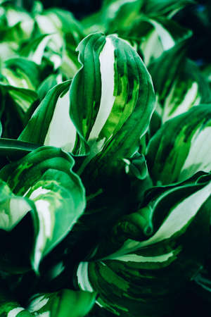 Beautiful green fresh leaves natural background. Natural floral background. Greenery spring concept.