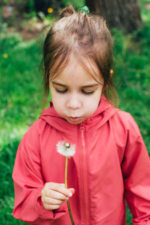 Cute little toddler Caucasian girl in pink jacket blowing on a dandelion in her hands over natural green background outdoor. Real genuine life moments. Carefree childhood.