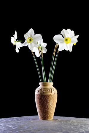 Close up of vase of blooming daffodils isolated on black background.