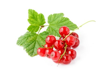 Red Currant.  isolated on White background photo
