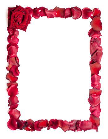 rose frame: A border of red rose petals