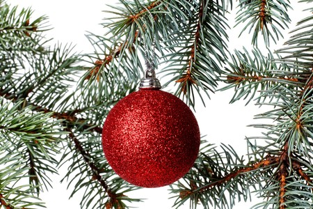 Pine branch and xmas ball photo