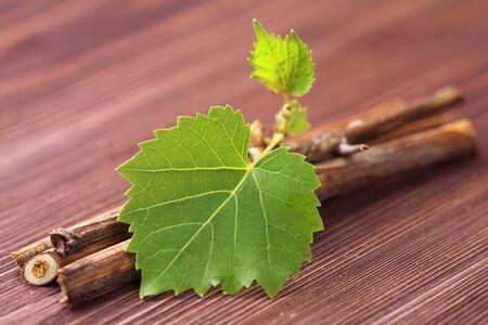 vine branch photo