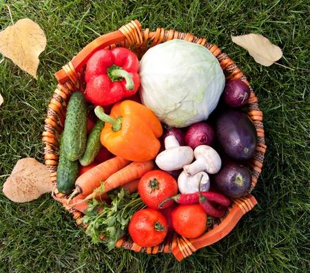 Fresh vegetable (cabbage, cucumber, bell pepper, onion, eggplant, carrot, tomato, mushroom, parsley) photo