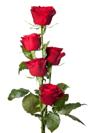 bunch up: beautiful close-up red rose over white background