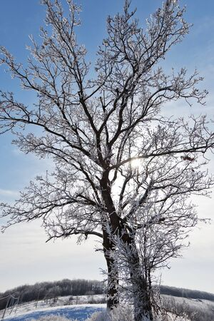 season specific: winter tree, season specific