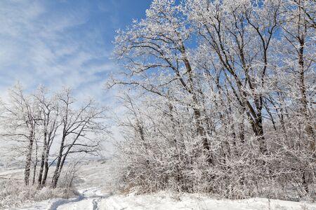 season specific: winter forest, season specific Stock Photo