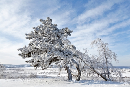 season specific: winter wood, season specific