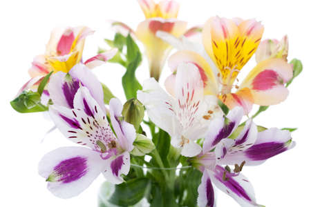 alstromeria: Alstroemeria flower isolated on white Stock Photo