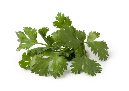 Fresh cilantro isolated on white background Banque d'images