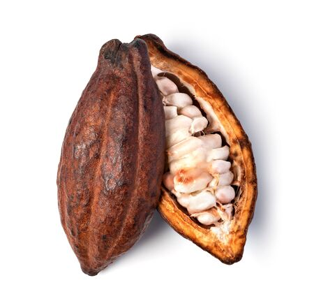 Cocoa pod on a isolated white background 스톡 콘텐츠