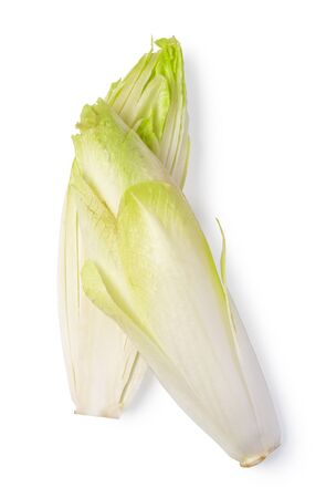 Fresh endive on white background