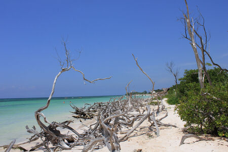 characterized: Dreaming Cuba: Through brushes, branches, vegetation, the white sand, the crystalline sea and the blue-Sky that characterized Cuba.