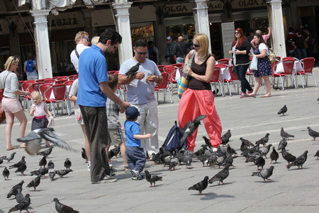 st mark: VENICE, ITALY - JUNE 4: People with pigeons all around in St.Mark Square in Venice, on June 4 2014 Editorial
