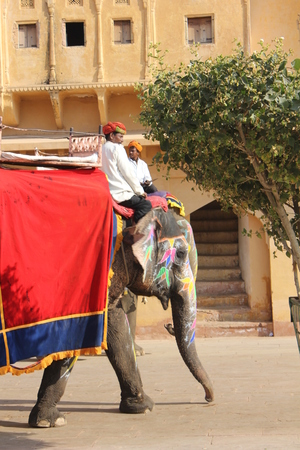 amber fort: JAIPUR, INDIA: Elephant decorated with traditional painted patterns inside the amber fort, India