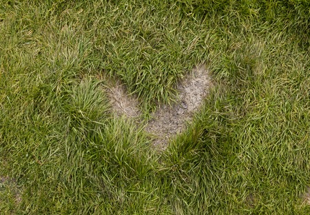 highs: MADESIMO. ITALY - AUGUST 18 2014: Heart shape grass in a path in the highs mountain of Madesimo, no retouch