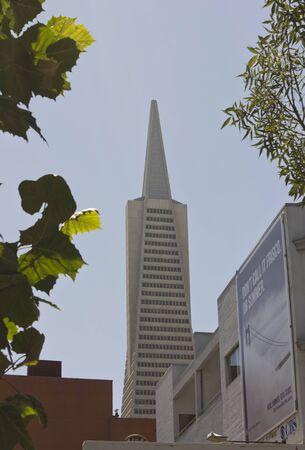 transamerica: SAN FRANCISCO, USA - AUG 12 2013: Architectural detail of The Transamerica Pyramid, the tallest skyscraper in the San Francisco skyline, through trees
