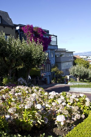 violet residential: SAN FRANCISCO, USA - AUG 11 2013: The famous Lombard Street in San Francisco, famous for its steep, one-block section with eight hairpin turns. Close up of a blue house with flowers